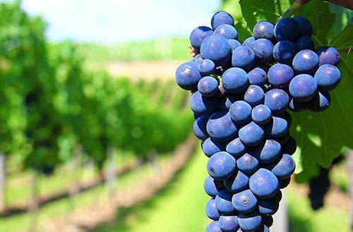 Rượu Vang Ý Nhập Khẩu – Cơn Sốt Qùa Tặng Tết 2019 !