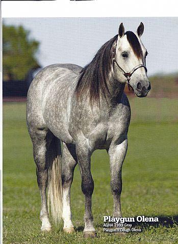 Gray Quarter Horses for Sale | Rocking G Ranch - Stallions