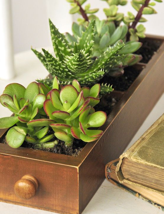How doll is THIS! Even *I* could manage the upkeep of a DIY little mini-garden *squee* :o)