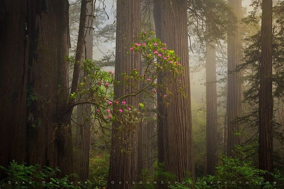 Photograph The Gift Tree by Sean Bagshaw on 500px