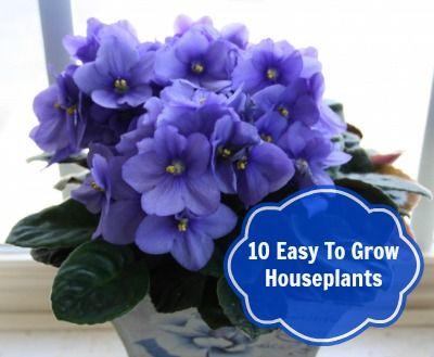 Top 10 easy to grow kid and pet friendly houseplants for Easy to grow houseplants