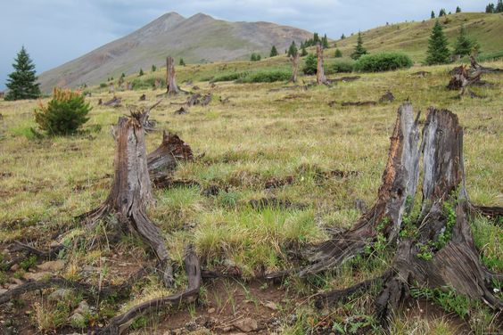 Boreas Pass hike with kids