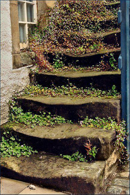 extérieur : escalier ancien en pierre, couvert de végétation, usure