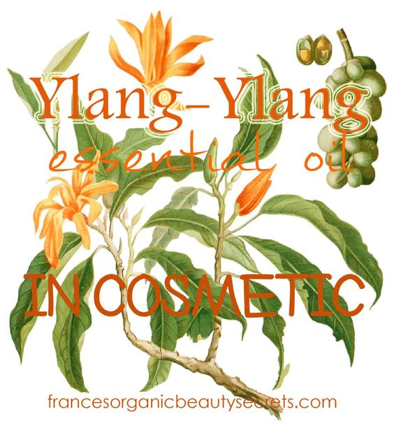Ylang ylang benefits for your beauty and wellbeing, the Oil of Happiness When talking about Ylang ylang, we immediately think about dizzying perfumes and fragrances from fare tropical island...but ...