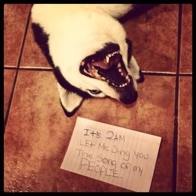 It's 2am, let me sing you the song of my people. -dogshaming.com