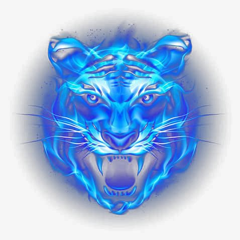 Tiger Head Picture Material Tiger Art Big Cats Art Tiger Pictures
