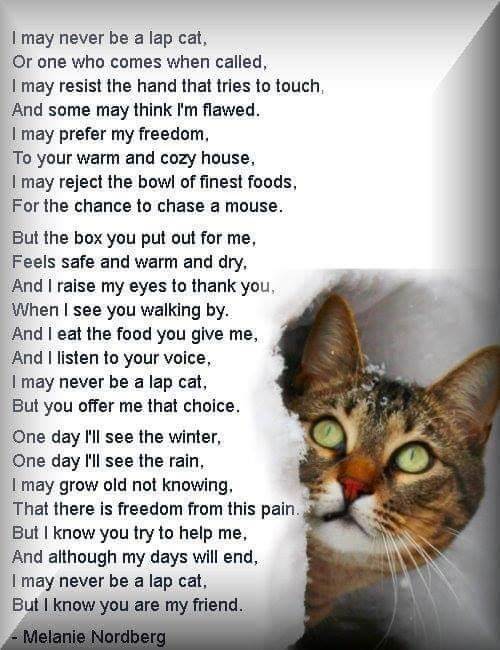 Pin By Julie Eggleston On Amazing Purrs Cats Feral Cats Pet Poems