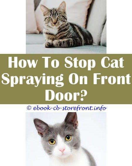 14 Stupefying Cat Stop Spraying After Neuter Admirable