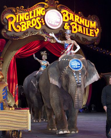 Ringling Bros and  Barnum & Bailey Elephant