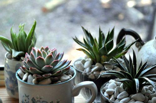 Teacup Succulent Garden