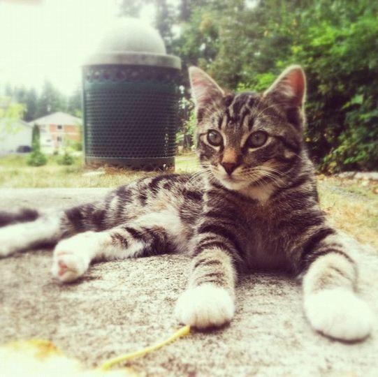 A Lost Kitten Prank