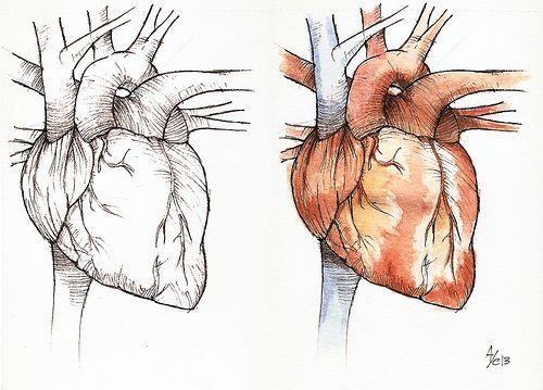 anatomy watercolor - Buscar con Google