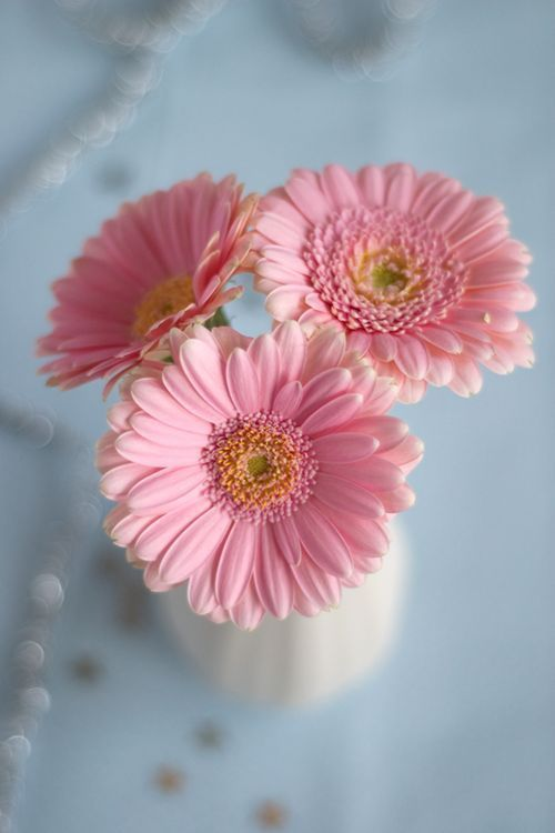 All Pink Flowers Are Beautiful And With Meanings Of Their Own So Which Do You Prefer Beautiful Flowers Small Pink Bunga Daisy Poster Bunga Mahkota Bunga