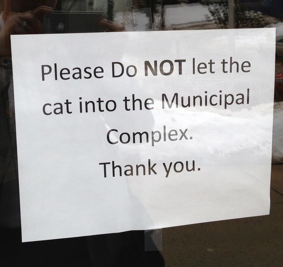 Sign posted on the door of a local courthouse. I love it that they have a specific courthouse cat!