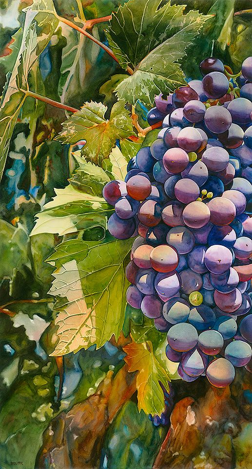 Grape Expectations, delicious watercolor!  http://www.designerhill.com/food.html: