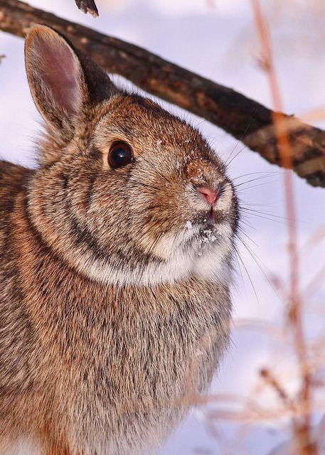 Hairy Rabbits 102