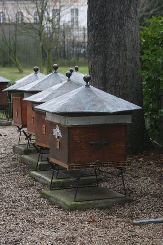 Hives at the Luxembourg Garden: