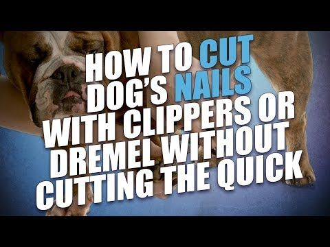 Grooming Dogs Can Be Tricky But With This Extensive Free Dog Grooming Course Online You Ll Quickly Learn How To Groom A Dog At Home Safel Dog Nails Dog Grooming Tools Dog