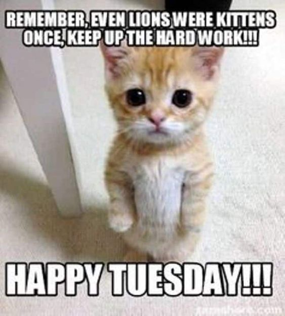 Tuesday Memes Share When Realizing It S Only Tuesday Digital Mom Funny Cat Memes Funny Cat Faces Funny Animal Faces
