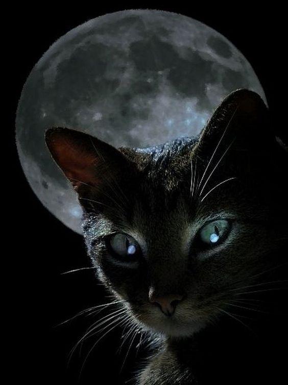 """Résultat de recherche d'images pour """"chat noir pinterest"""""""