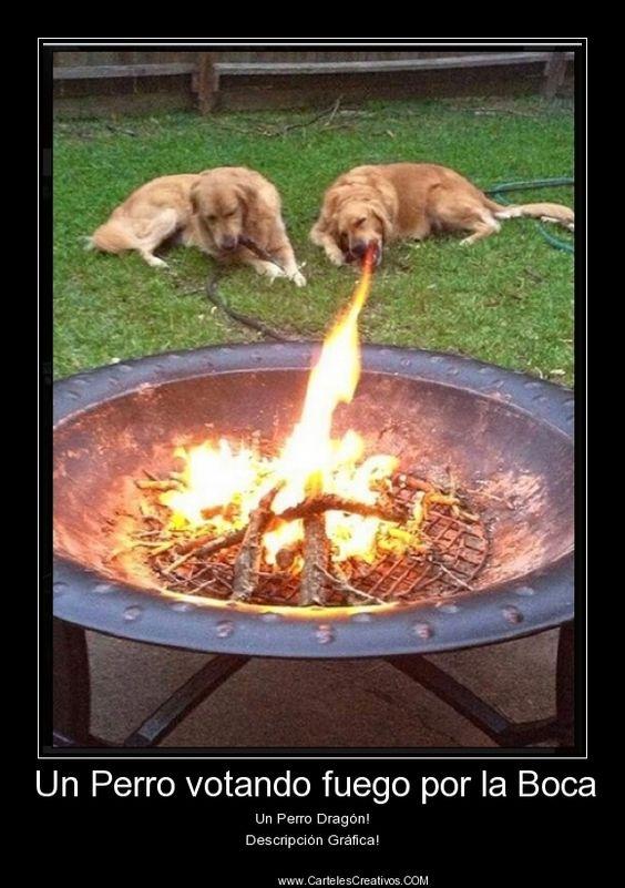 Un Perro votando fuego por la Boca Un Perro Dragón! Descripción Gráfica!