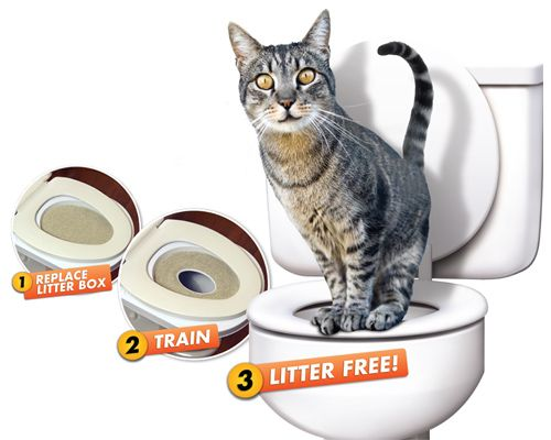 Okay, apparently you really can toilet train a cat.  Users on Amazon say it works given time.  ha!