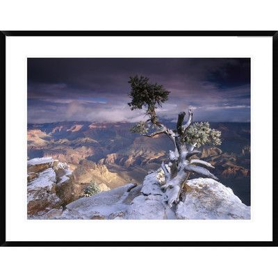 Global Gallery South Rim of Grand Canyon with a Dusting of Snow Seen from Yaki Point, Grand Canyon National Park, Arizona by Tim Fitzharris Framed ...