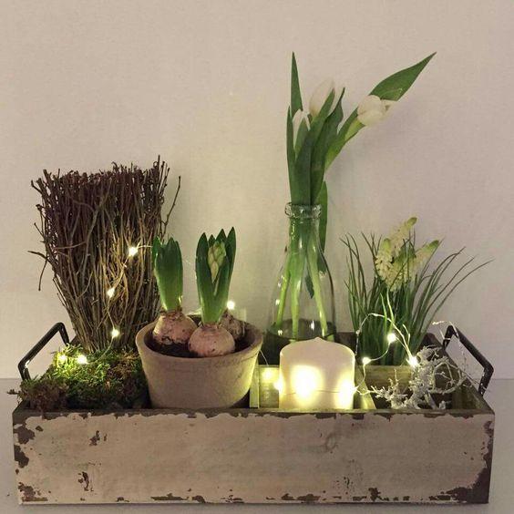 Indoor garden scape: