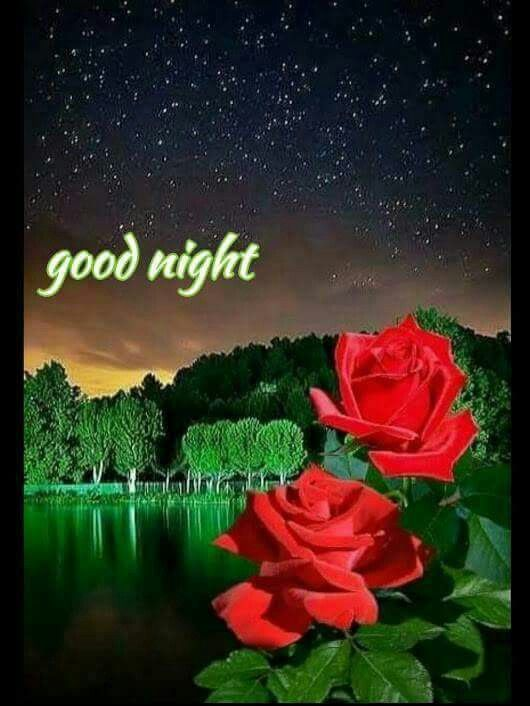 Pin By Ana Rebeca Sanchez On Good Night Sweet Dreams Good Night Flowers Rose Images Beautiful Flowers