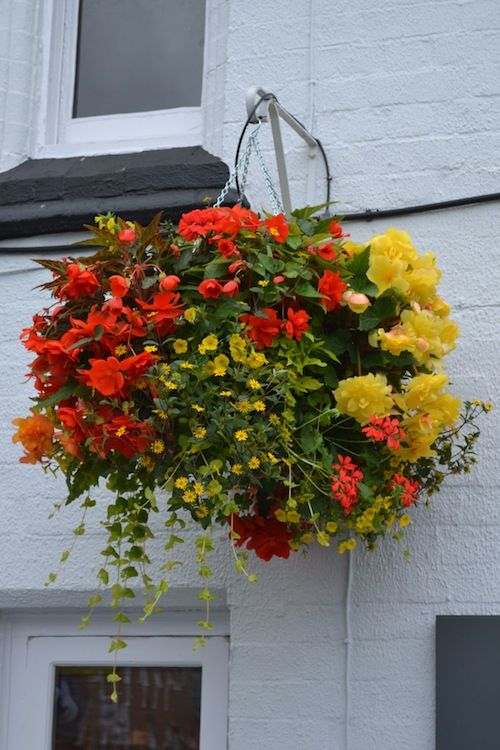 Hanging Flower Baskets Seattle : Hanging baskets and tubs on