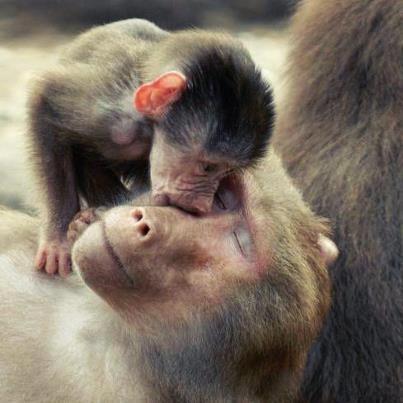 E como podem falar que os animais não tem sentimentos ?? São um exemplo.: