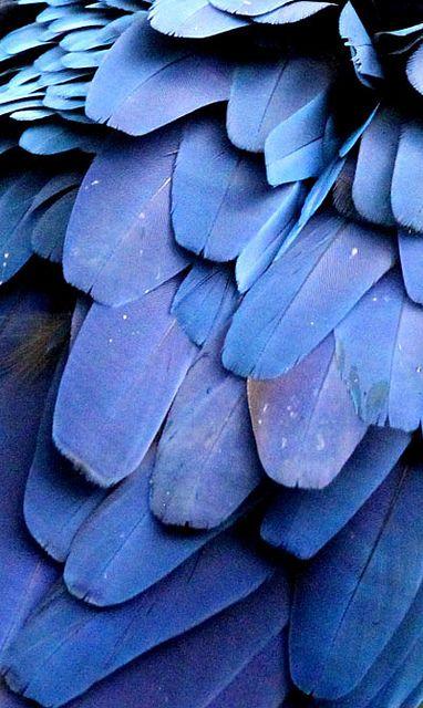 plumas azul violeta