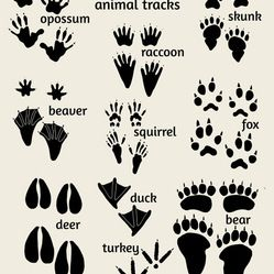 Nursery Art, Woodland Animals - Woodland nursery art, Field Guide to Animal Tracks poster. Features footprints of deer, bear, fox, and more....
