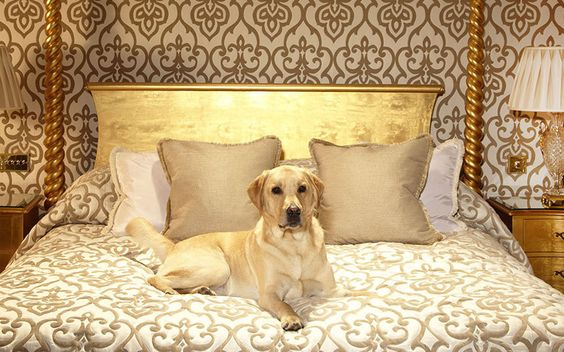 The best dog-friendly hotels in Britain, featuring the top places to stay for   coastal walking routes, cosy fires, pet-friendly restaurants and in-room dog   beds, in locations including the Lake District, New Forest and Yorkshire   Dales