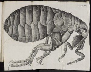 From Dad. Robert Hooke, Micrographia – Treasures of the Bodleian