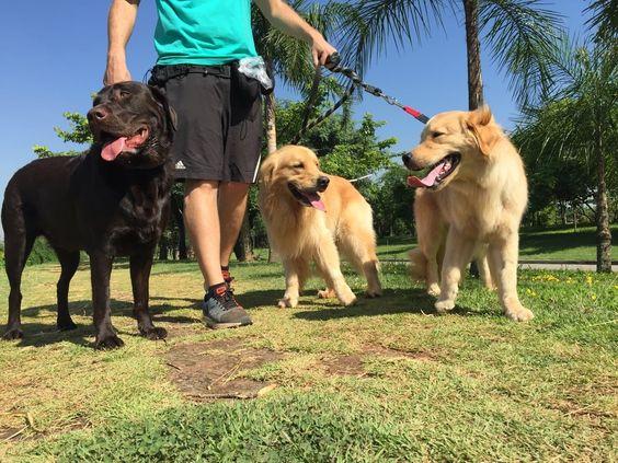 passeador de caes com tres cachorros felizes em parque villa lobos pinheiros, sao paulo, sp.jpg