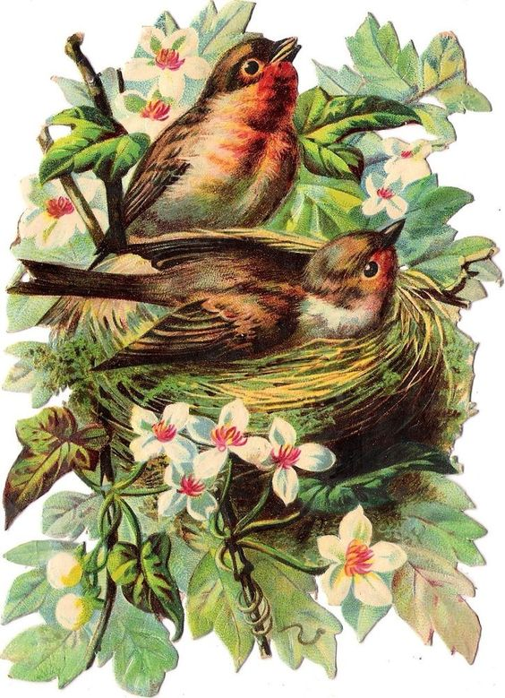 Oblaten Glanzbild scrap die cut Vogel  16cm Paar Nest Ast robin Baum Blüten: