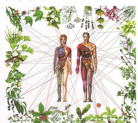 Guérir les sept chakras avec des herbes On utilise les plantes comme médicaments depuis des milliers d'années pour guérir divers maux acquérir de la sagesse