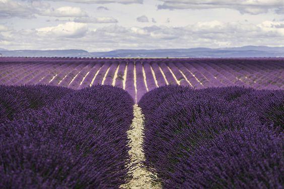 Valensole (Provence - France)   par Kaptah