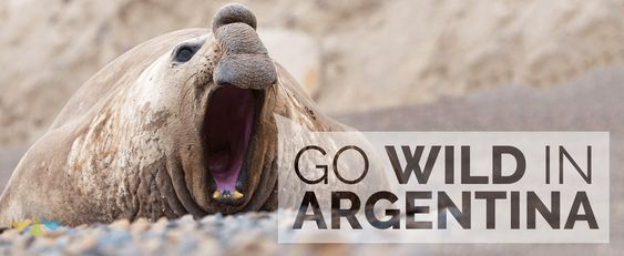 Argentina wildlife abounds in its many natural and protected reserves.