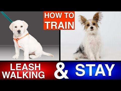 Zak George S Dog Training Revolution Youtube Training Your