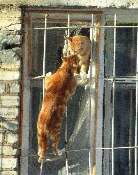 Gatinho à janela
