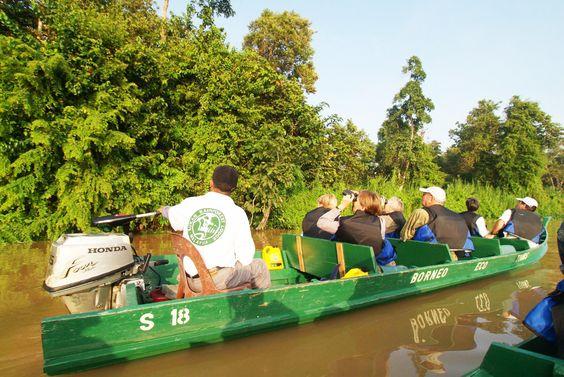 Tierbeobachtungen vom Wasser aus in Sukau