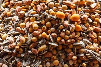 """Kichererbsen sind gesunde Mineralstoffbomben Kichererbsen stammen aus der orientalischen Küche, erfreuen sich aber auch hierzulande immer größerer Beliebtheit. Vor allem in vegetarischen und veganen Gerichten wie Gemüsecurry oder Hummus sind sie sehr schmackhaft. Zudem """"enthalten die Hülsenfrüchte auch viele gesunde Mineralstoffe wie Kalzium, Eisen und Folsäure"""". Darauf weist der Verbraucherinformationsdienst """"aid""""."""