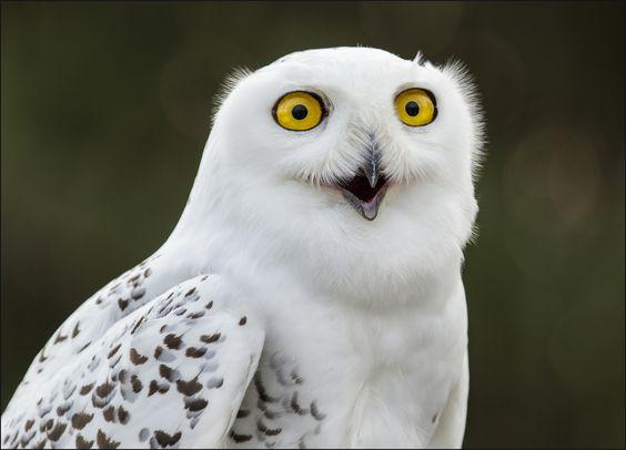 Cute baby white owl - photo#32
