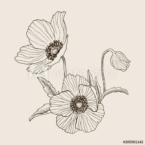 Anemone Flower Vector Drawing Bouquet Isolated Wild Plant And Leaves Herbal Engraved Style Illustration De Wildflower Drawing Flower Drawing Flower Sketches