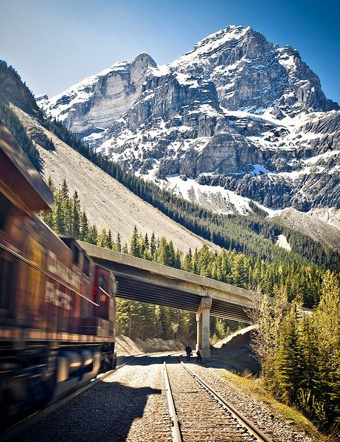 Mountain Train, Rocky Mountains, Colorado  photo via alcoholo
