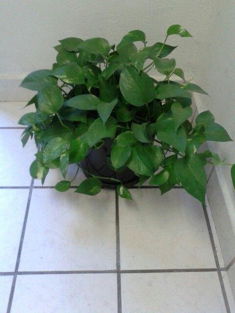 Plantas de sombra Árboles flores arbustos cactus Pinterest