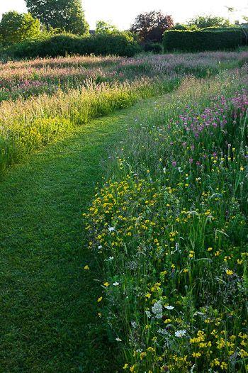 Gazon paden and bijen on pinterest for Wild grass landscaping