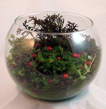 Amazon.com: Partridge Berry Bowl Terrarium Kit - Great Gift! - Easy to Grow: Pet Supplies